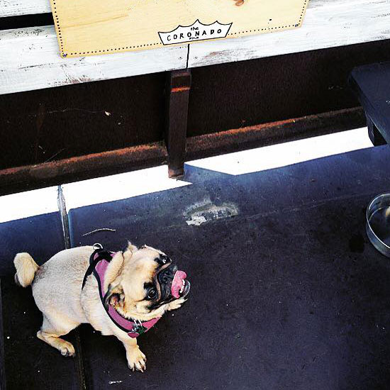 The Coronado - dog-friendly patio